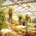 Jardines con Piedras de Río